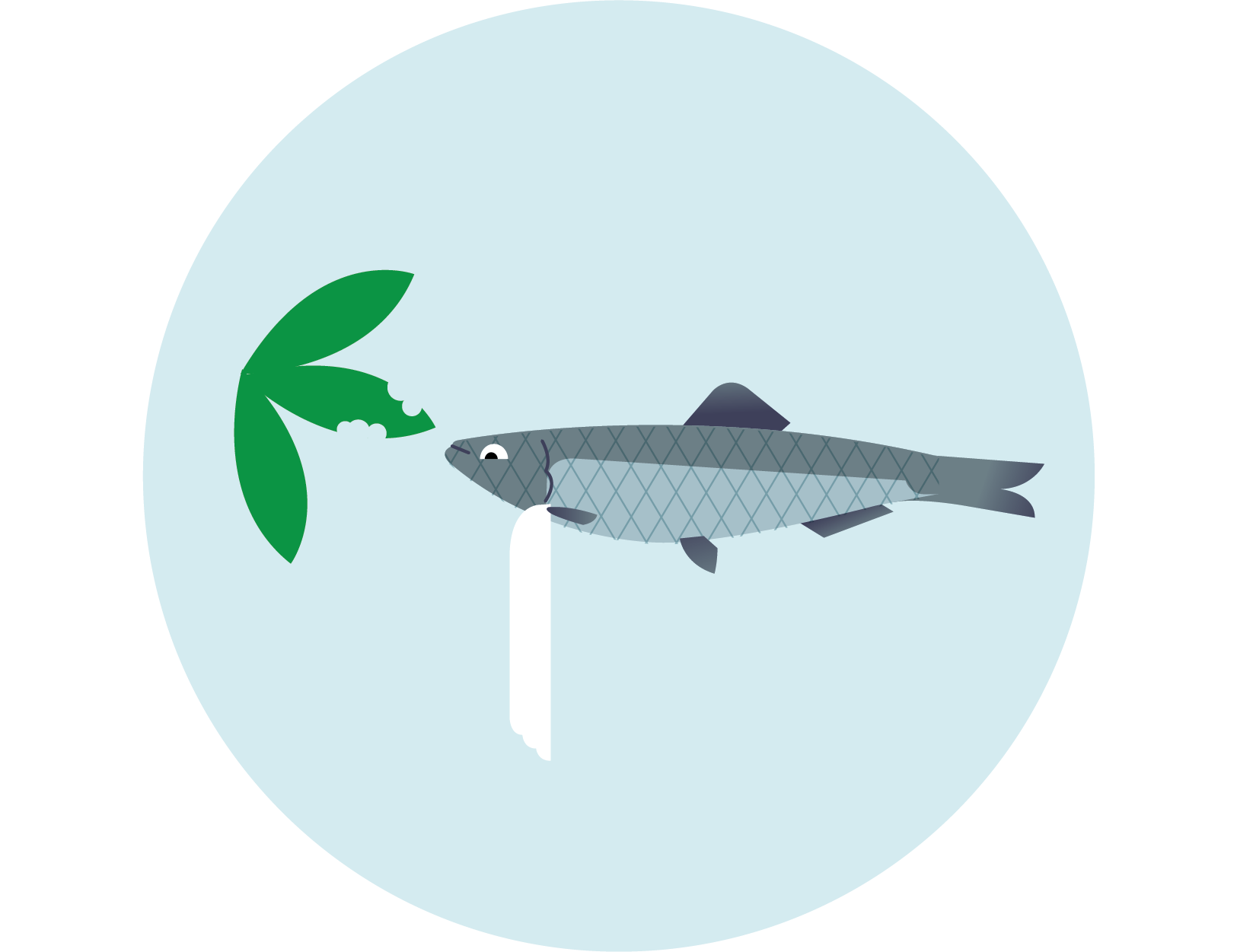 Szprot - Sprattus sprattus balticus