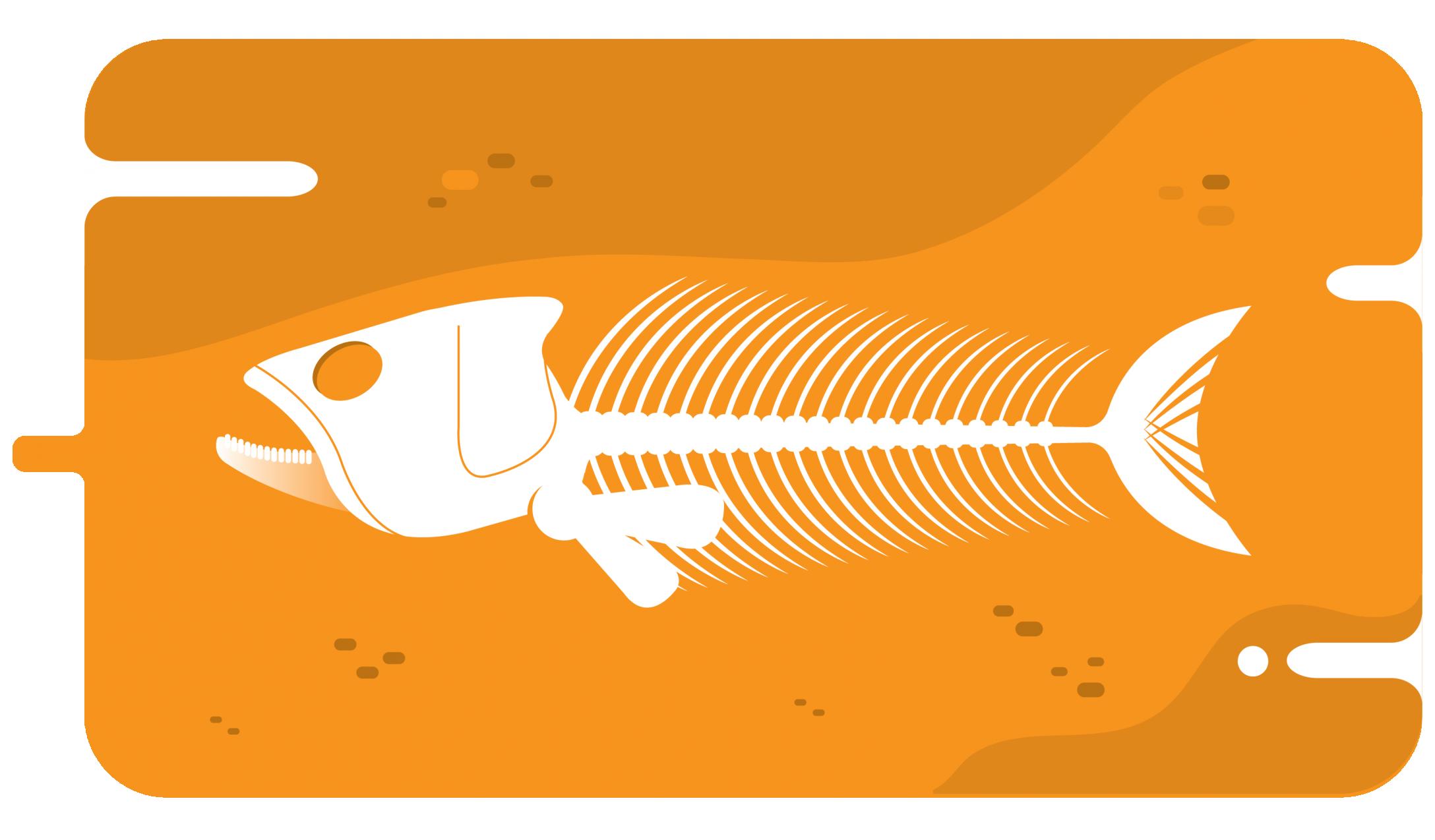 Która ryba ma mało ości?