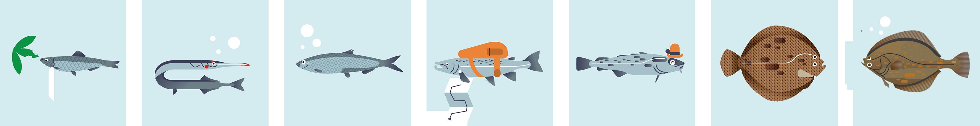 Wiemy już, które gatunki ryb są bałtyckie. Znamy też okresy ochronne.
