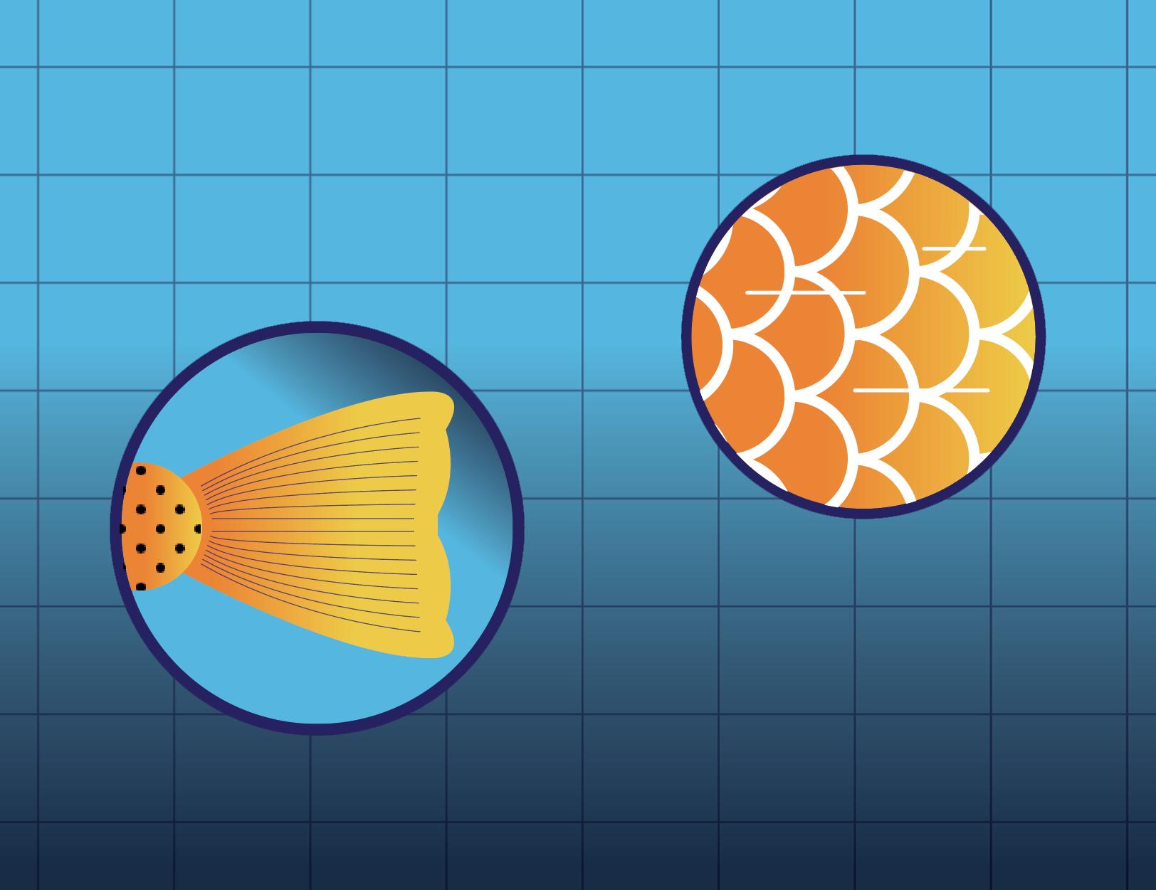 Łuski, płetwy