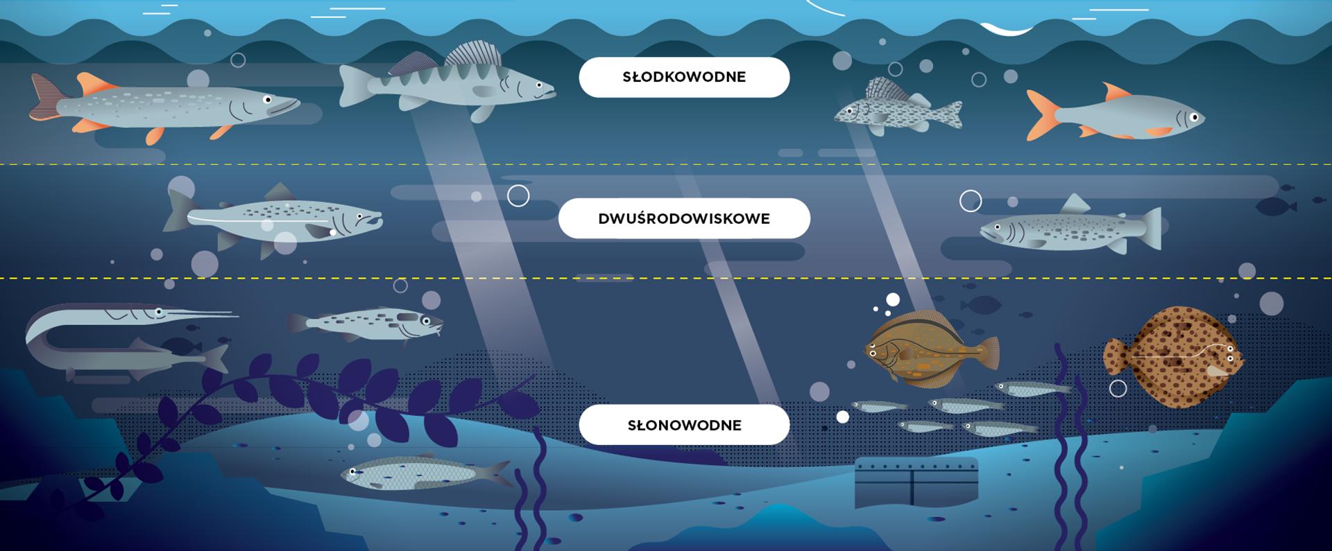 Rodzaje ryb bałtyckich