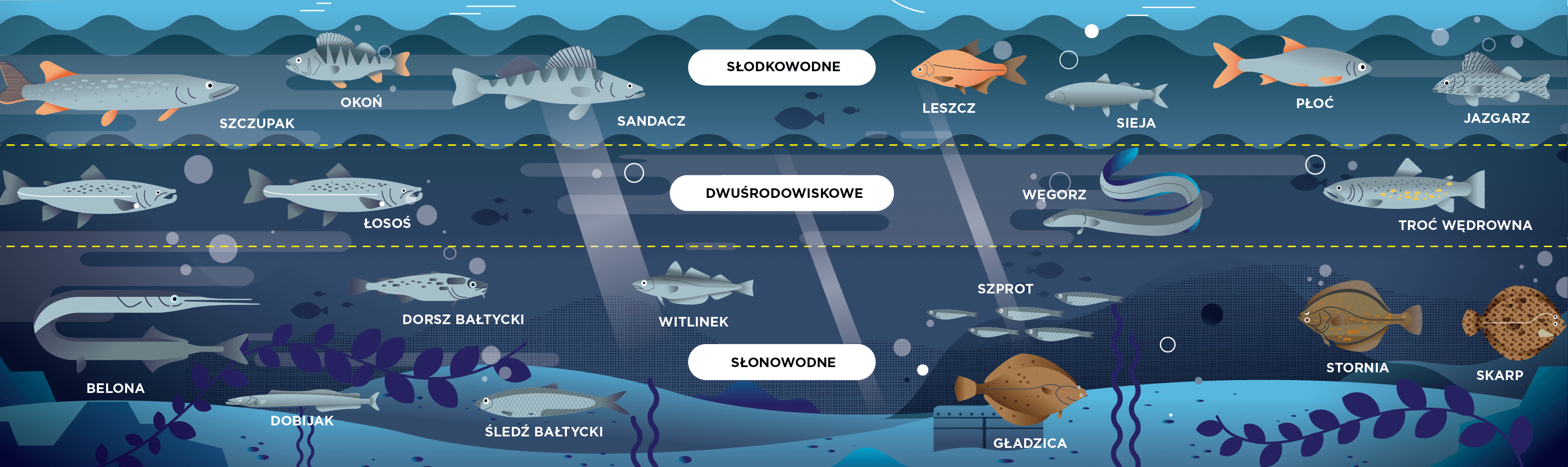 Rodzaje ryb w Morzu Bałtyckim